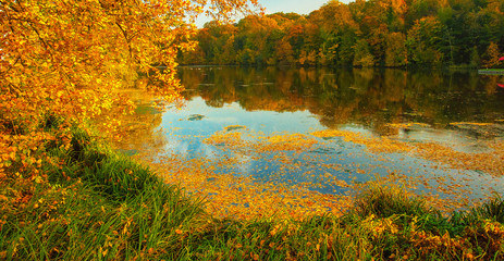 Nice autumnal scene with lake