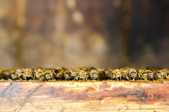 Bees on honeycomb in a hive