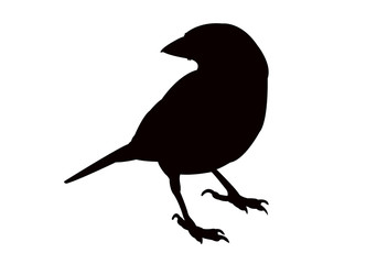 sparrow body silhouette vector