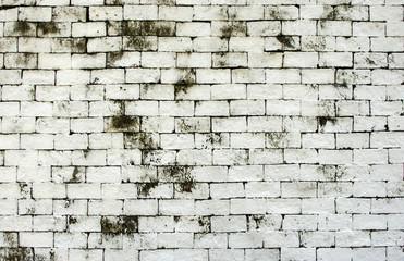 White brick weathered wall texture, black moss stain of stonework.