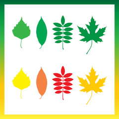 Leaves of trees birch, ashberry, maple, cherry