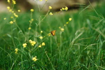 Butterfly on yellow flowers in a summer park on a sunny day
