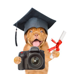 Dog photographer with black graduation hat and diploma taking pictures. isolated on white background