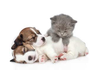 Kitten on a group of sleeping puppies Jack Russell. isolated on white background