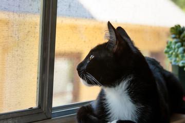 cat looking upward out window
