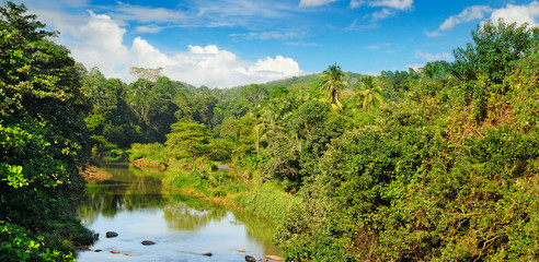 Tropical forest on banks of river and blue sky