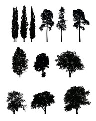 Set of realistic vector silhouettes of trees, isolated on white background