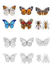 Set of colored and outline butterflies and bees.   Stock line vector illustration.