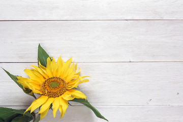 Background with yellow sunflower on white wooden table. Copy space.