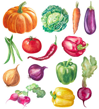 set of vegetables isolated on white. watercolor hand drawn illustration