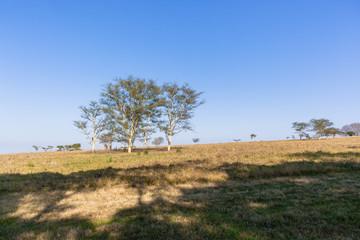 Trees Grass Field Landscape