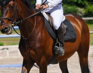 Le cavalier et sa monture en compétition