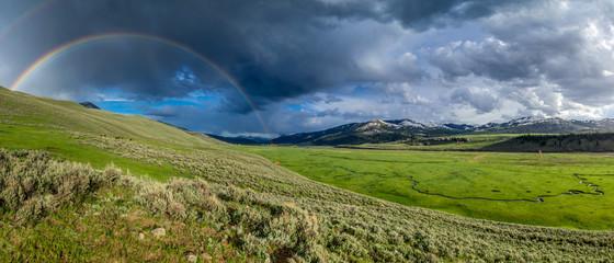 Photo sur Aluminium Buffalo Regenbogen über saftig grünem Lamar Valley mit Bison Herde im Yellowstone Nationalpark, Wyoming