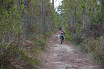 Woman riding a bicycle along path at the forest.