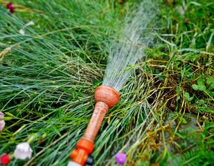 Potable water in the vegetable garden.