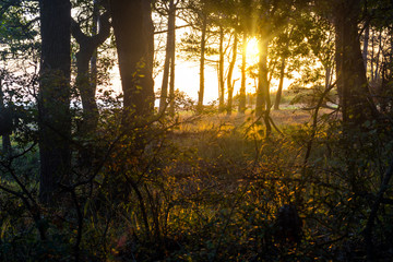Bright sunrise on the glade in forest