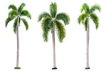 Set of Palm trees isolated on white background with clipping path