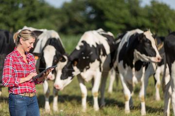 female farmer managing cows