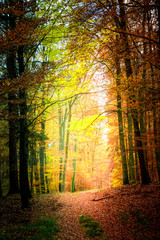 Wonderful autumn in the forest in Poland