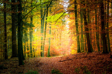 Wonderful forest in the autumn in Europe