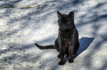 Black cat sitting on the road