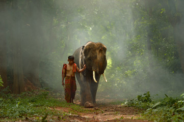 Young elephant and Man walking in the mist during sunset,Thailand