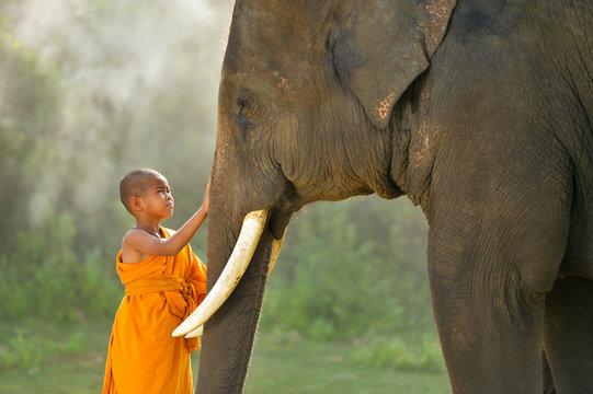 Novice monks and elephant ,Thailand
