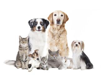Hunde Katzen freigestellt Fotobehang