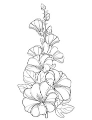 Vector bunch with outline Alcea rosea or Hollyhock flower, stem, bud and leaf isolated on white background. Floral elements in contour style with ornate Hollyhock for summer design and coloring book.