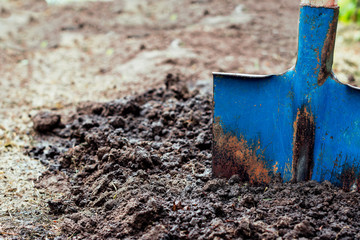 Shovel  in the soil, in the vegetable garden, man loosens dirt in the farmland, agriculture and tough work concept