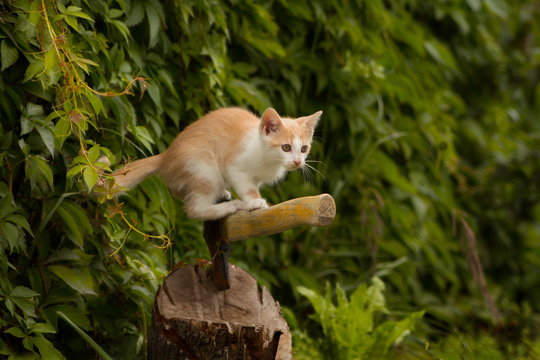 рыжий котенок охотится в саду