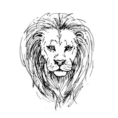 Sketch by pen of a lion head