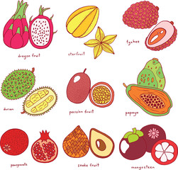 Colorful hand drawn set with tropical exotic fruits. Vector grap