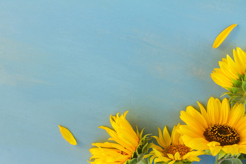 Fresh yellow Sunflowers on blue wooden background with copy space