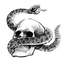 Human skull and a rattle snake