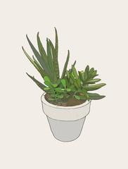 ndoor plants in pots