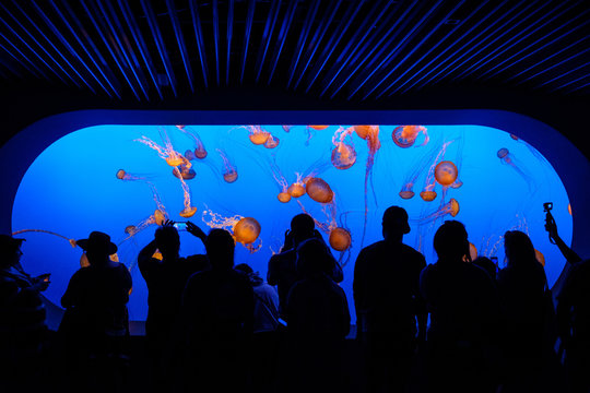 Silhouetted crowds looking at pink, red and brown jellyfish in an aquarium with a blue background