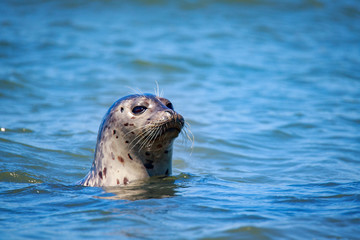 Harbor Seals at California Coastal Line