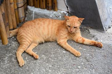Brown cat relaxing on rural road