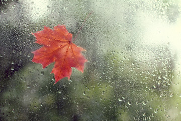 autumn on the other side/ Window with raindrops and a maple leaf view from the house