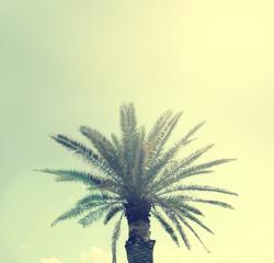 Palm tree on a Sardinian beach, retro film style
