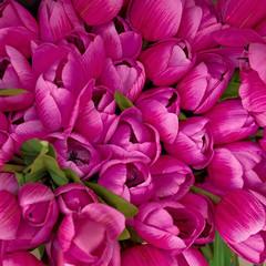 colorful dark violet fake tulips, floral background
