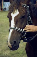 Beautiful horse, proud animal