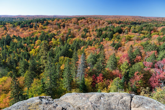 Fall forest with rock in the foreground in Algonquin Park Ontario