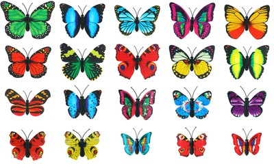 collection set colorful butterfly on white background
