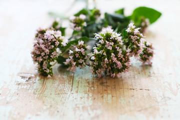 Kräuter im Garten - Echter Dost, wilder Majoran, Oregano in Blüte (Origanum vulgare) Gartenkräuter, alternative Medizin