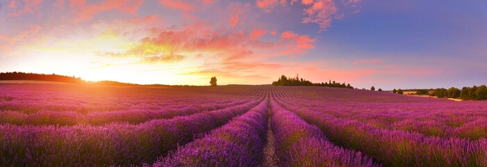 Papiers peints Grenat Panorama of lavender field at sunrise, Provence, France