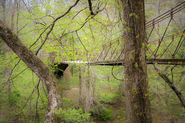 Forest Bridge on Natchez Trace