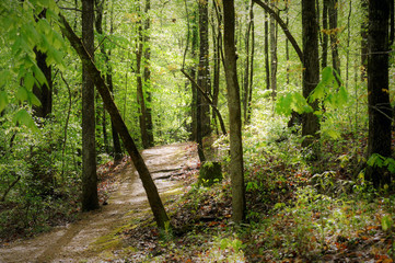 Trail on the Natchez Trace