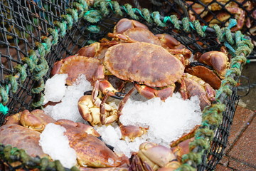 Crab on ice for sale at a seafood market in Scotland